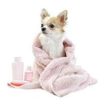 Hunde baden und fönen 2