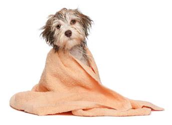 Hundepflege Giessen
