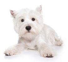 Hund trimmem 2